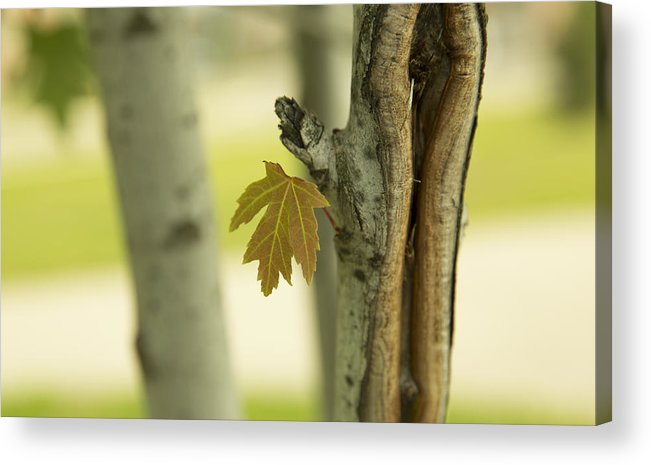 Leaf Acrylic Print featuring the photograph Lone Leaf by Zoltan Tougas