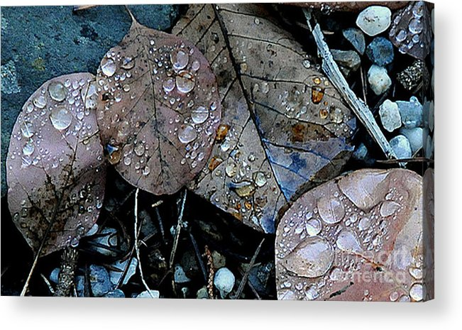 Wet Leaves Acrylic Print featuring the photograph Wet Leaves by Artist and Photographer Laura Wrede
