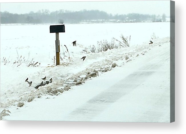 Indiana Scenes Acrylic Print featuring the photograph Winter Foragers by Julie Dant