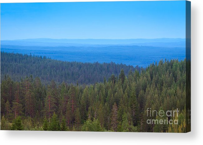 Sweden Acrylic Print featuring the photograph Nordic Forest by Johan Larson