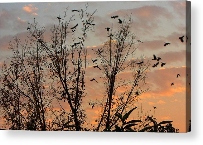 Birds Acrylic Print featuring the photograph Black Birds At Sundown by Caroline Eve Urbania
