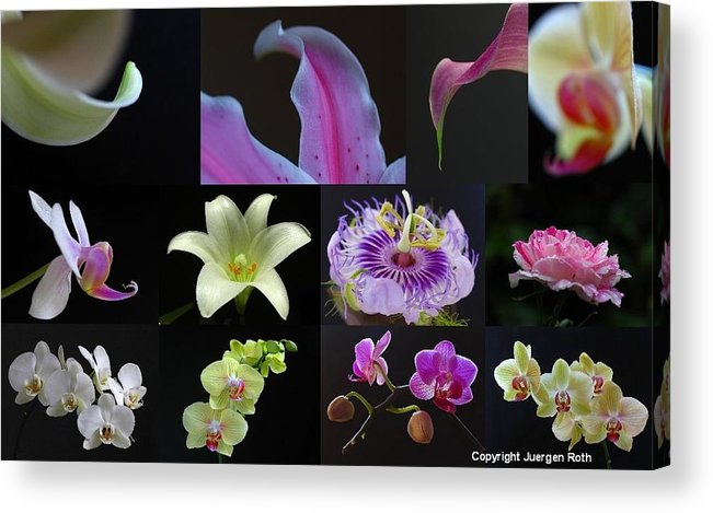 Artwork Acrylic Print featuring the photograph Collection Of Flowers Over Black by Juergen Roth