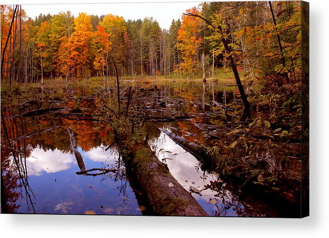 Forest Photography Acrylic Print featuring the photograph If A Tree Falls by Evelyn Patrick