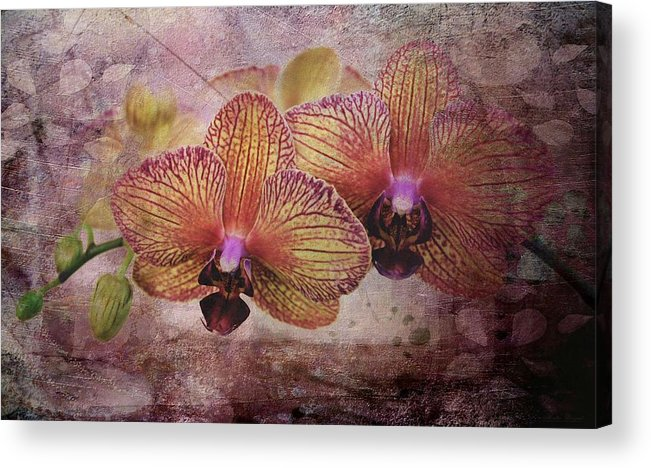Orchids Acrylic Print featuring the photograph Orchid Layers by Mattie Bryant