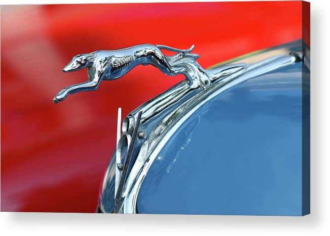 Greyhound Acrylic Print featuring the photograph Racer by Rebecca Cozart