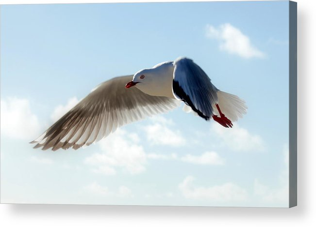 Seagull Acrylic Print featuring the photograph Seagull In Flight by Robert Jenner