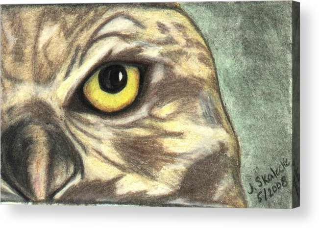 Owl Acrylic Print featuring the drawing Watchful Eye by Jennifer Skalecke