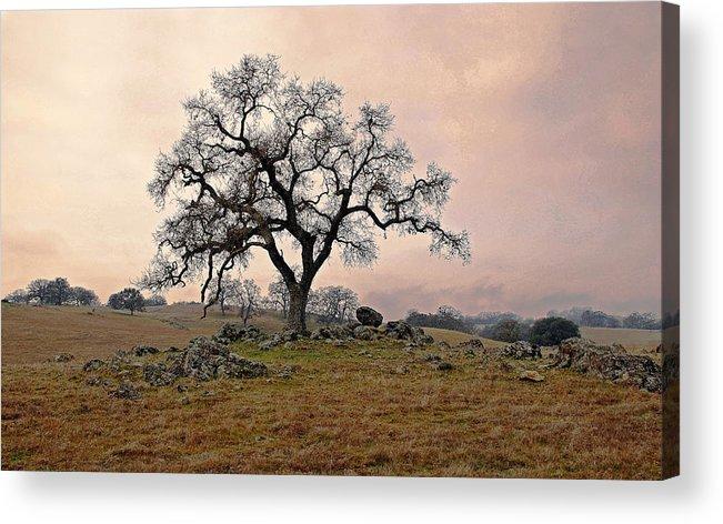 Landscape Acrylic Print featuring the photograph Amador Oak by M Ryan