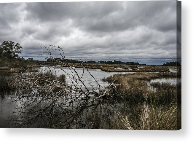 Landscape Acrylic Print featuring the photograph Beautifully Fallen by Steven Taylor