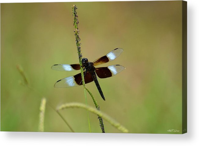 Dreaming Dragonfly Acrylic Print featuring the photograph Dreaming Dragonfly by Maria Urso