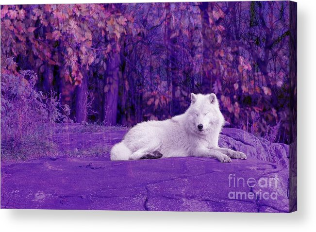 Dreaming Acrylic Print featuring the photograph Dreaming Of Another World by Vicki Spindler