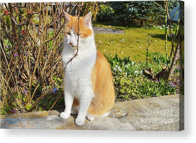 Isolated Acrylic Print featuring the photograph Enjoing The Sunshine by Felicia Tica