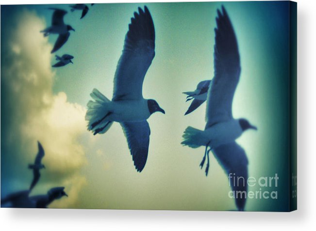 Seagulls Acrylic Print featuring the photograph Gulls by Paulo Guimaraes