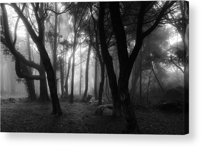 Mystic Acrylic Print featuring the photograph Into The Mystic by Marco Oliveira