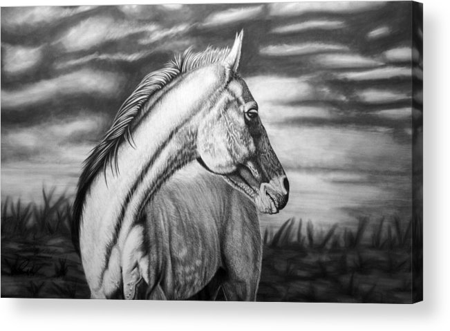 Canvas Acrylic Print featuring the drawing Looking Back by Glen Powell