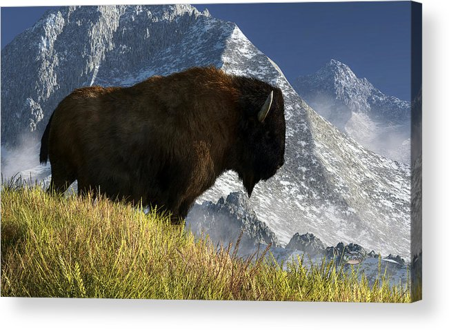 Bison Acrylic Print featuring the digital art Rocky Mountain Buffalo by Daniel Eskridge