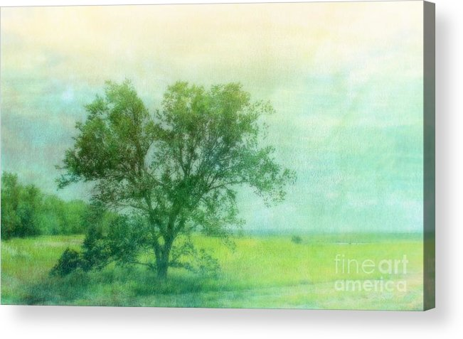 Tree Acrylic Print featuring the photograph Tree In The Flint Hills by Susan Turner