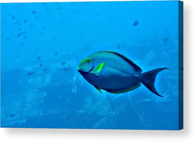 Fish Acrylic Print featuring the photograph Under The Honolulu Sea by Jennifer Boisvert