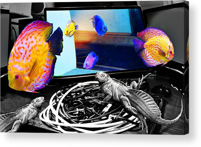 Fish Acrylic Print featuring the digital art Wednesday Sunrise by CD Ostenak