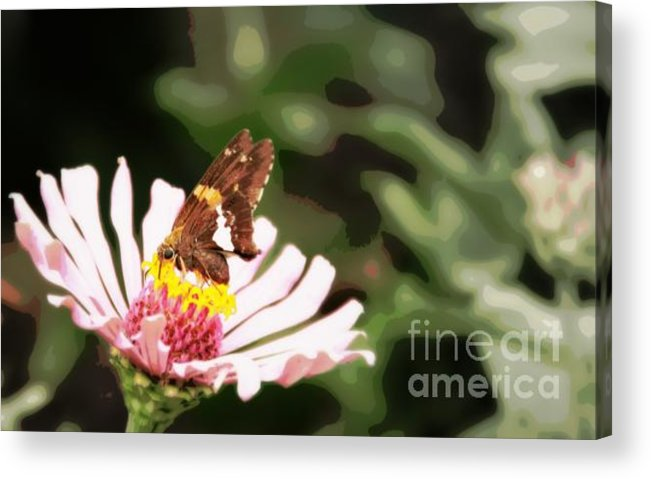 Acrylic Print featuring the photograph Butterfly Flower by Brian Seidenfrau
