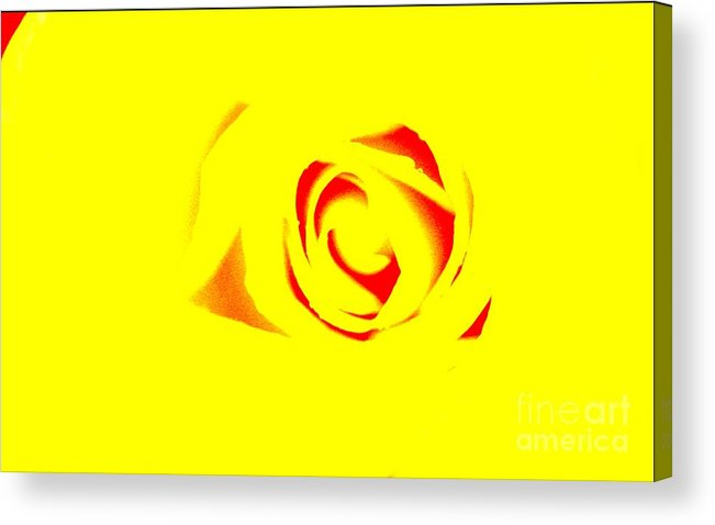 Rose Art Acrylic Print featuring the photograph Curves by Kim Henderson
