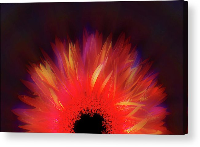 Avantgarde Acrylic Print featuring the photograph Feathered Floral by Li  van Saathoff
