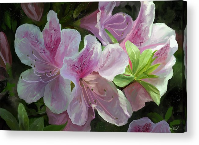Flowers Acrylic Print featuring the mixed media Kissed By Sunlight by Steve Goad