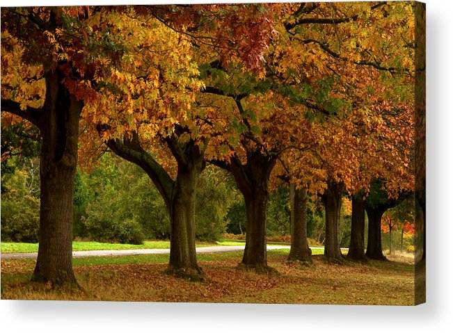 Tree Acrylic Print featuring the photograph Tree Line by David Resnikoff