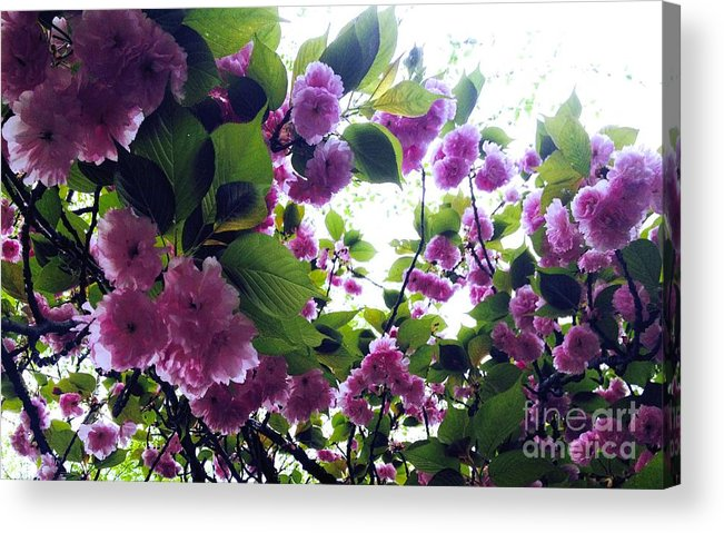 Nature Acrylic Print featuring the photograph 09032015066 by Debbie L Foreman