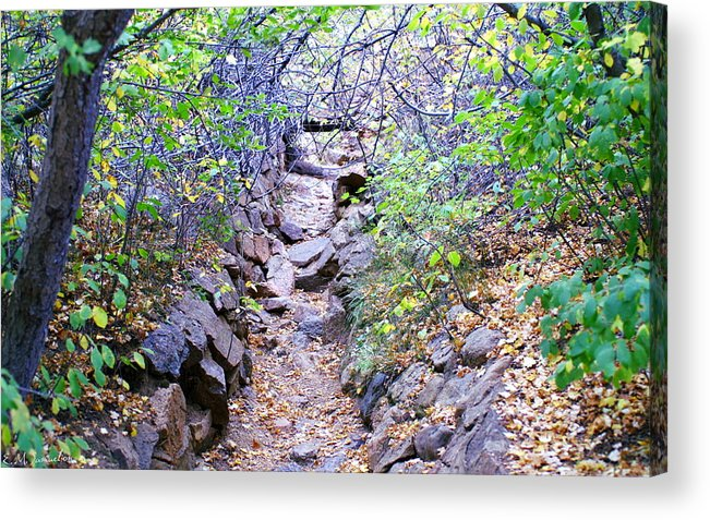 Landscape Acrylic Print featuring the photograph A View In The Woods by Elise Samuelson