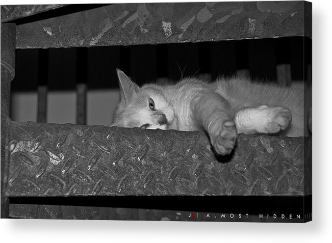 Cat Acrylic Print featuring the photograph Almost Hidden by Jonathan Ellis Keys