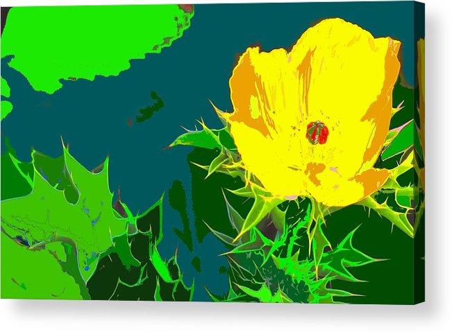 Acrylic Print featuring the photograph Brimstone Yellow by Ian MacDonald