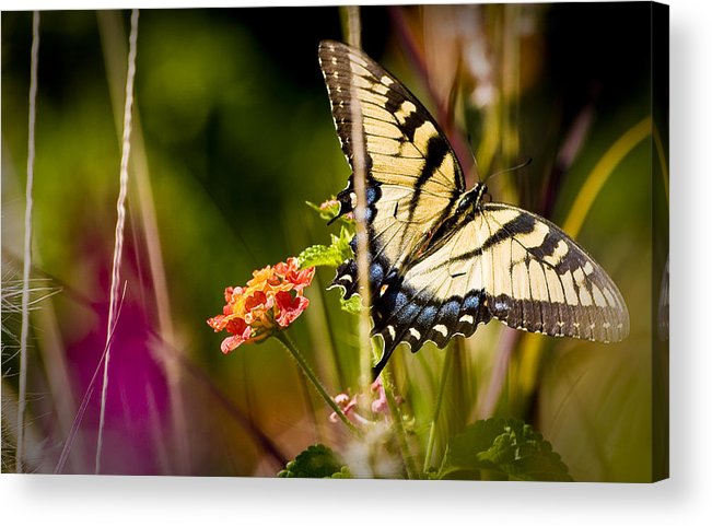 Nature Acrylic Print featuring the photograph Butterfly Jungle by Ches Black