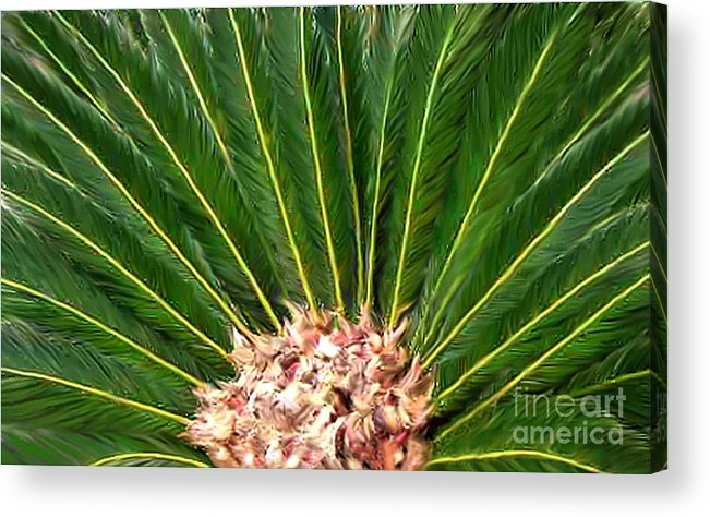 Nature Acrylic Print featuring the photograph Centered Palm by Lucyna A M Green