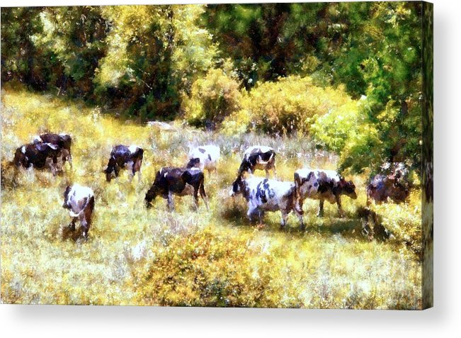 Black And White Cows Acrylic Print featuring the photograph Dairy Cows In A Summer Pasture by Janine Riley