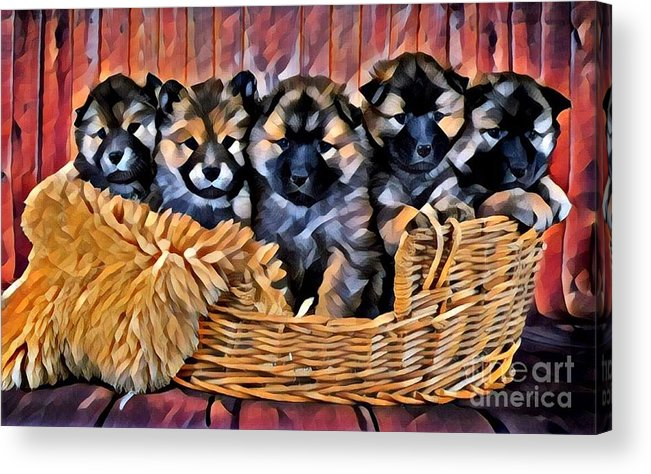 Animal Acrylic Print featuring the photograph Fur Babies by Tarisa Smith