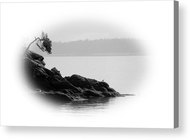 Black Acrylic Print featuring the photograph Lonley Gull by J D Banks
