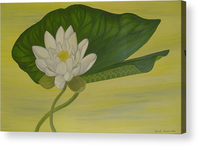 Marinella Owens Acrylic Print featuring the painting Nymphaea Alba by Marinella Owens