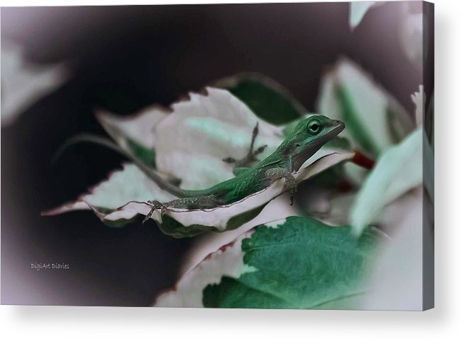 Lizard Acrylic Print featuring the photograph Snow Queen Hammock by DigiArt Diaries by Vicky B Fuller