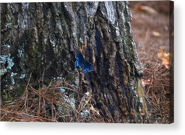 Butterfly Acrylic Print featuring the photograph Something Blue by Jonathan Ellis Keys
