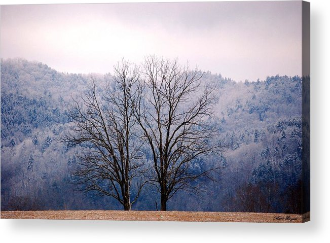 Trees Acrylic Print featuring the photograph Twin Sisters by Mattie Bryant