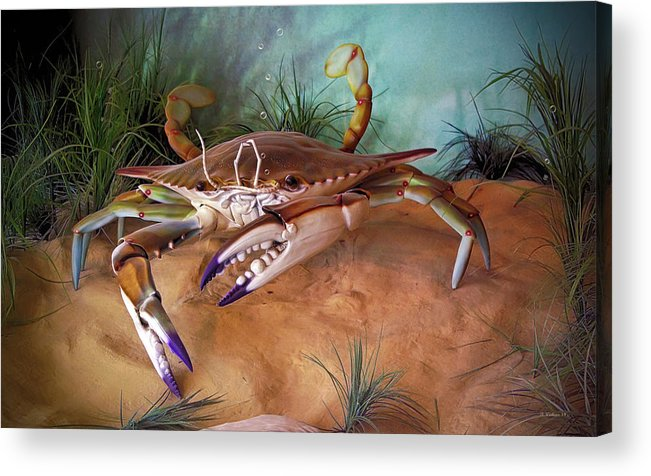 2d Acrylic Print featuring the photograph Blue Crab by Brian Wallace