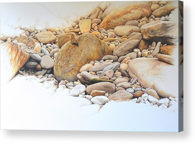 Wildlife Paintings Acrylic Print featuring the painting Painted Lady Butterfly by Alan M Hunt