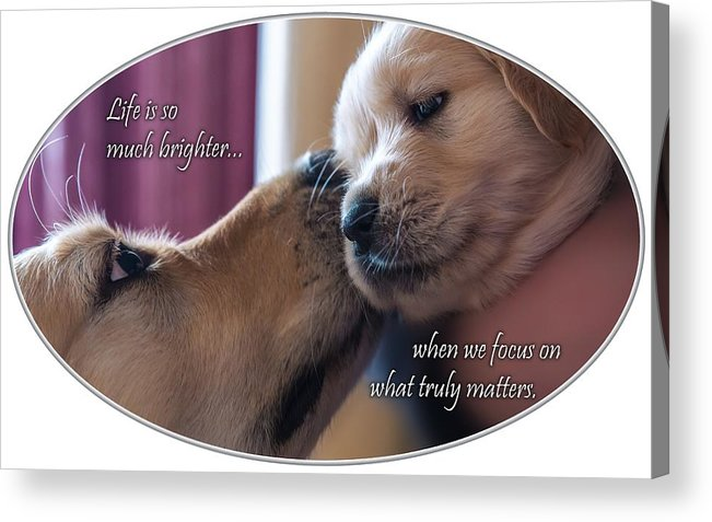 Puppy Acrylic Print featuring the photograph Puppy Love by Chris Whiton
