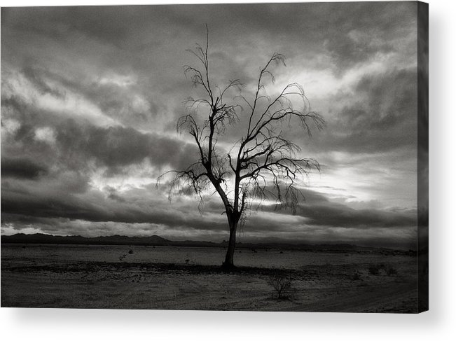Storm Acrylic Print featuring the photograph Bare Tree by John Nelson
