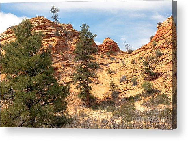 Bighorn Sheep Acrylic Print featuring the photograph Bighorn Sheep On A Ridge by Robert Bales