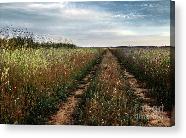 Adventure Acrylic Print featuring the photograph Countryside Tracks by Carlos Caetano