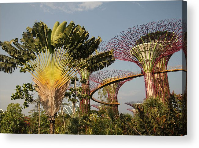 Singapore Acrylic Print featuring the photograph Marina Bay Gardens by Antti Muranen