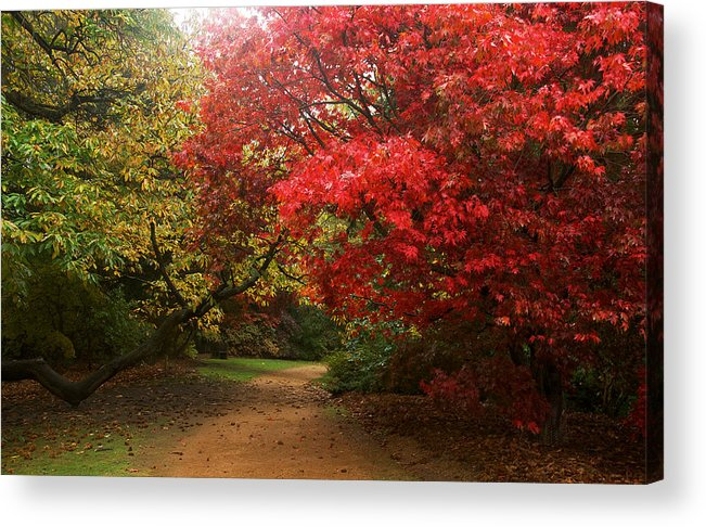 Virginia Water Acrylic Print featuring the photograph Autumn Path by David Resnikoff