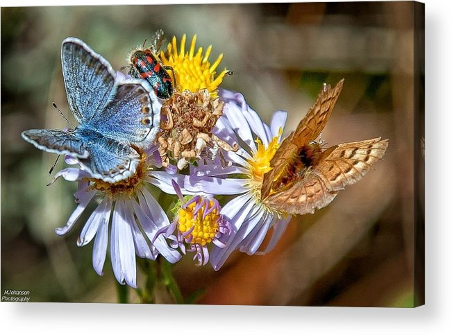 Butterflies Acrylic Print featuring the photograph Crowded by Mitch Johanson